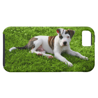 Puppy Pit Bull T-Bone Case For The iPhone 5