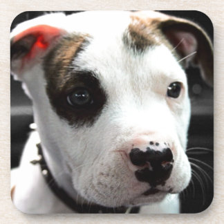 Puppy Pit Bull T-Bone Coaster