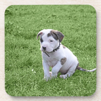 Puppy Pit Bull T-Bone Drink Coaster