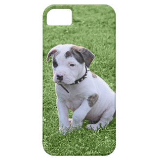Puppy Pit Bull T-Bone iPhone 5 Cases