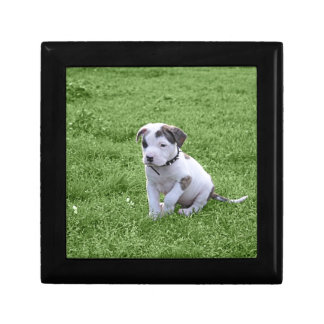 Puppy Pit Bull T-Bone Jewelry Box