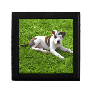 Puppy Pit Bull T-Bone Trinket Box