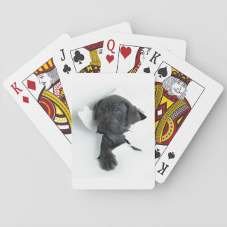 puppy playing cards