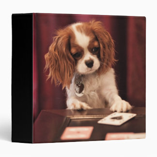 Puppy plays with cards on coffee table. 3 ring binders