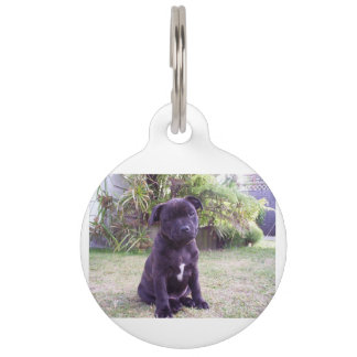puppy staffordshire bull terrier pet name tag