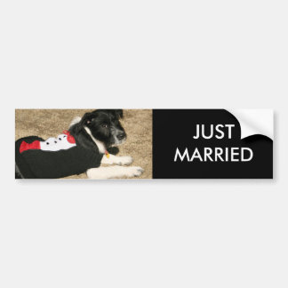 Puppy Tux Car Bumper Sticker