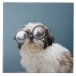 Puppy wearing thick glasses tile