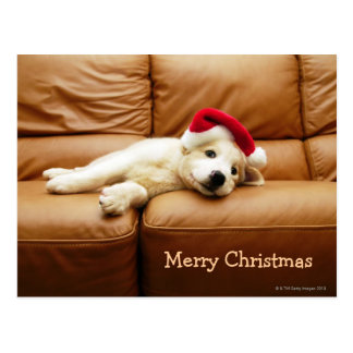 Puppy wears a christmas hat and lying on sofa postcard