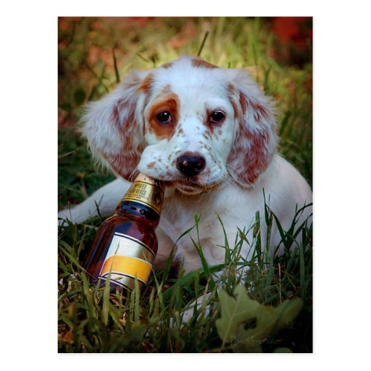 Puppy With Beer Bottle Postcard