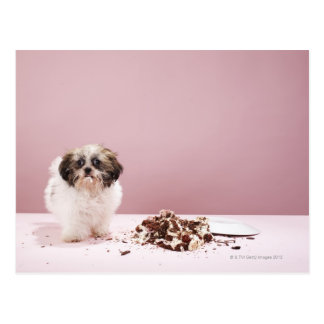 Puppy with cake on floor postcard