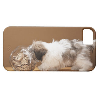 Puppy with head in cookie jar iPhone 5 case