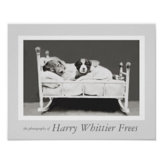 Puppy with Insomnia by Harry Whittier Frees Poster