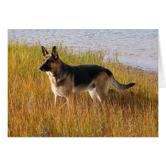 Pure Bred German Shepherd Photo on Note Card