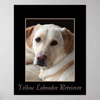Pure Bred Yellow Labrador Retriever Poster