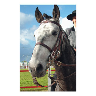 Pure breed horse stationery