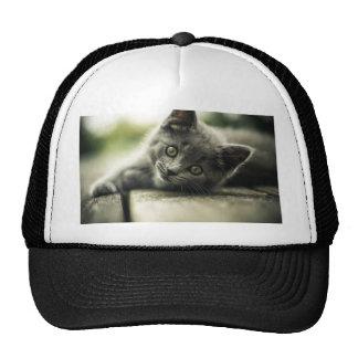 Pure Gray Kitten Trucker Hat