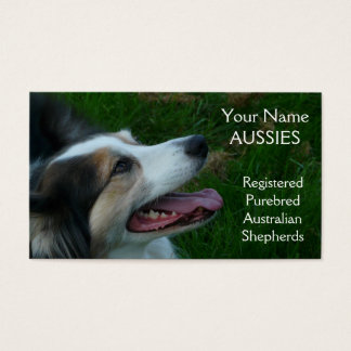 Purebred Black Tricolor Aussie  Business Card