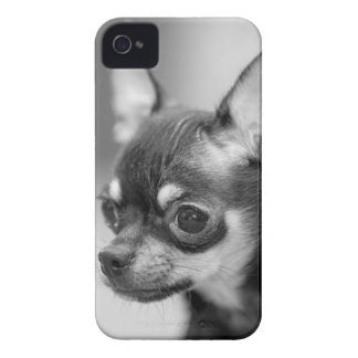 Purebred Chiwawa Puppy iPhone 4 Cover