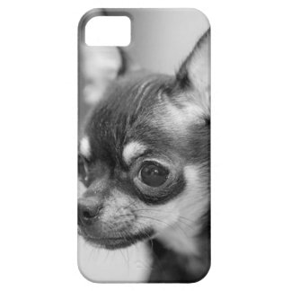 Purebred Chiwawa Puppy iPhone 5 Cover