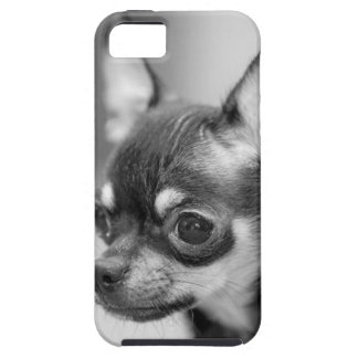 Purebred Chiwawa Puppy iPhone 5 Covers