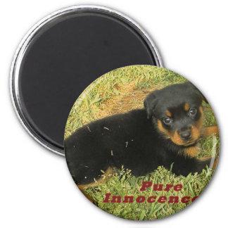 pureinnocence rottweiler puppy magnet