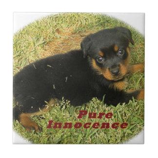 pureinnocence rottweiler puppy tile