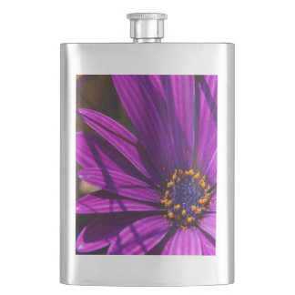 Purple African Daisy Close Up Hip Flask