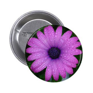 Purple African Daisy with Raindrops 2 Inch Round Button