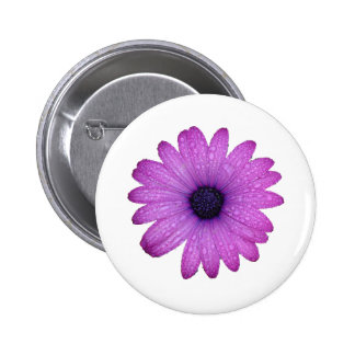 Purple African Daisy with Raindrops Isolated 2 Inch Round Button