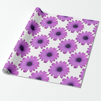 Purple African Daisy with Raindrops Isolated Wrapping Paper