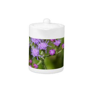 Purple Ageratum Wildflowers