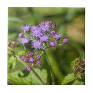Purple Ageratum Wildflowers Ceramic Tile