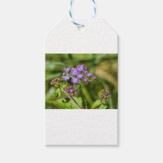 Purple Ageratum Wildflowers Gift Tags