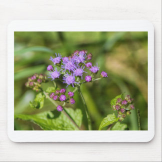 Purple Ageratum Wildflowers Mouse Pad