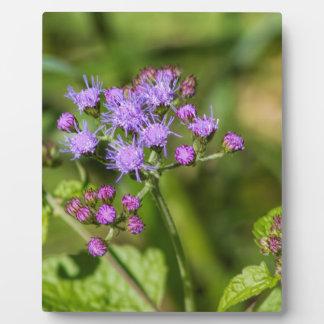 Purple Ageratum Wildflowers Plaque