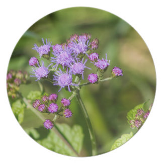 Purple Ageratum Wildflowers Plate