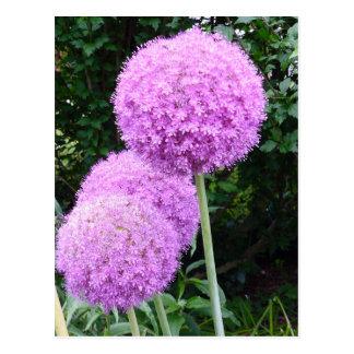 Purple Allium Flower Postcard