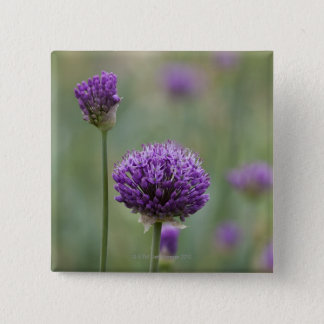 Purple Alliums with natural diffused background 2 Inch Square Button