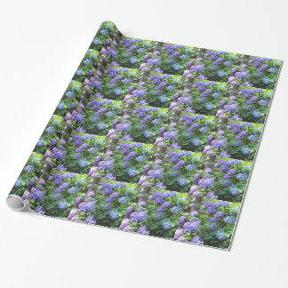 Purple and blue Hydrangea flowers