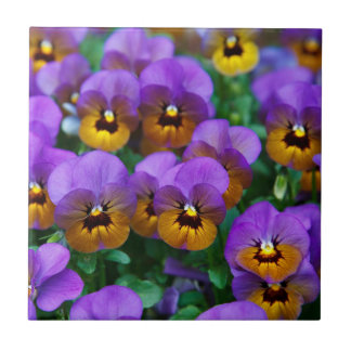 Purple and Gold Pansies Tile
