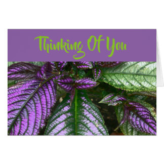 PURPLE AND GREEN PERSIAN SHIELD PLANT/THINKING OF CARD