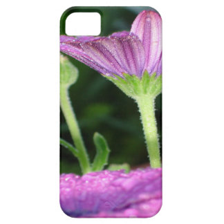 Purple And Pink Daisy Flower in Full Bloom Case For The iPhone 5