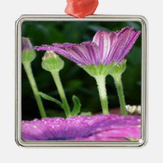 Purple And Pink Daisy Flower in Full Bloom Metal Ornament