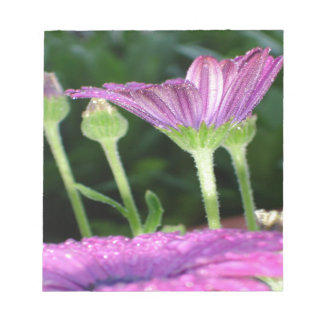 Purple And Pink Daisy Flower in Full Bloom Notepad