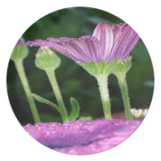 Purple And Pink Daisy Flower in Full Bloom Plates
