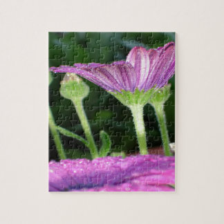 Purple And Pink Daisy Flower in Full Bloom Puzzles