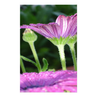 Purple And Pink Daisy Flower in Full Bloom Stationery
