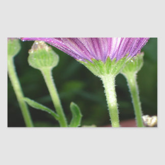 Purple And Pink Daisy Flower in Full Bloom Sticker