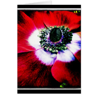 Purple and Red Anemone Blank Greeting Card