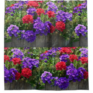 Purple And Red Verbena